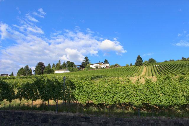 Visual da região vinícola de Baden-Baden