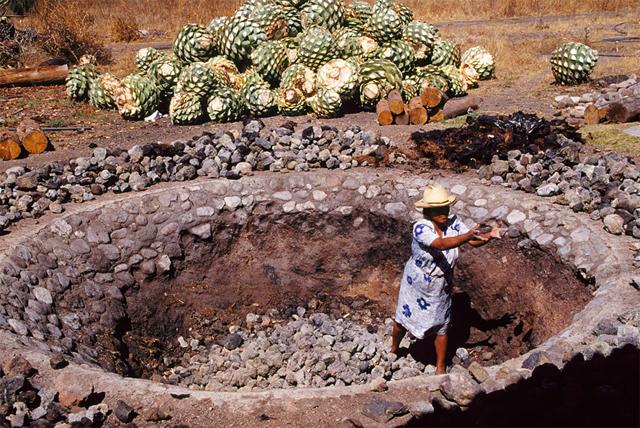 """O """"forno"""" cavado no solo e forrado com lenha e pedras para o cozimento do agave"""