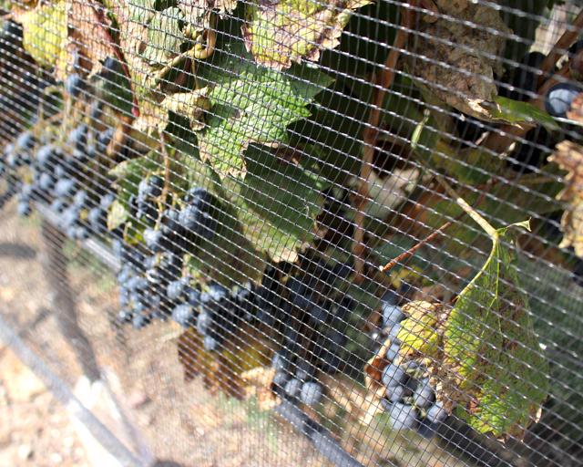 Telas para proteção dos vinhedos contra granizo, algo bem comum na região de Mendoza