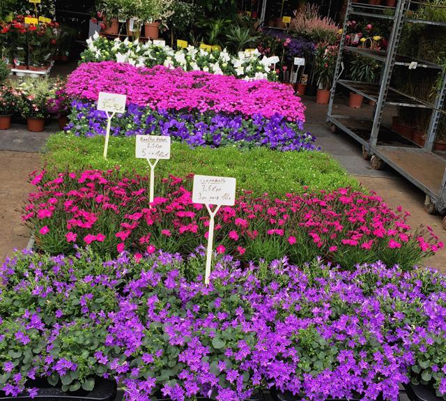 Banca de flores do Marché du Midi