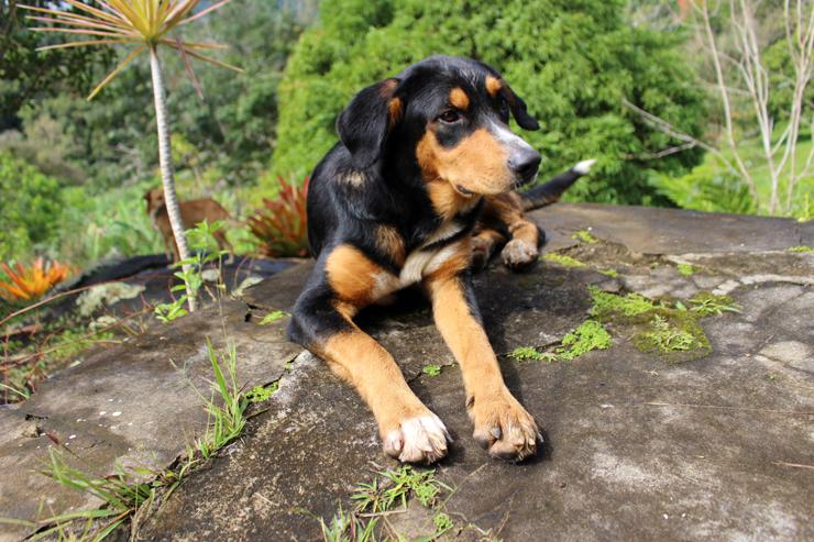 """Malhada, um dos cachorros que vivem no que Diego chama de """"Floresta Encantada"""""""