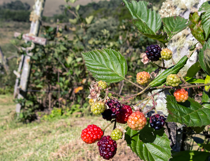 As frutas vermelhas....