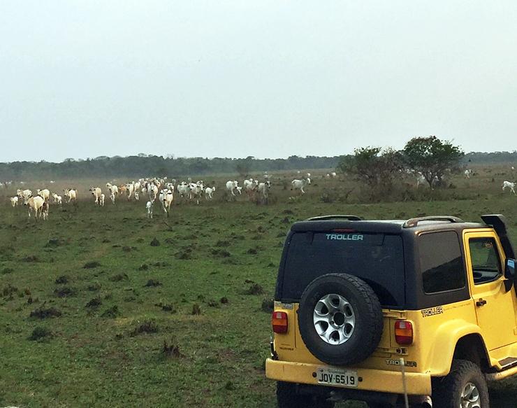 Panorama da Fazenda Figueiral, no Pantanal, na qual se cria gado orgânico
