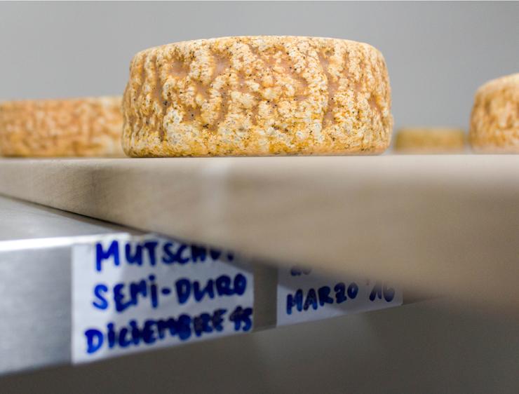 Um dos tipo de queijos produzidos no hotel - somente para os hóspedes