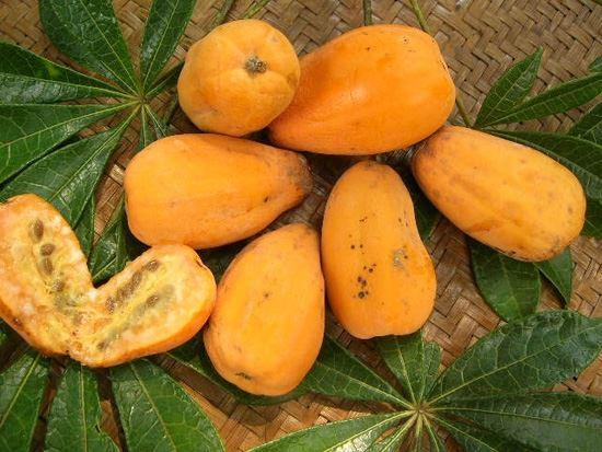 """Jaracatiá é o nome popular dado a diferentes espécies de árvores do gênero Jacaratia, também conhecido como Mamoeiro-bravo, Mamoeiro-do-mato, Mamãozinho e mamão de veado. Em Tupi-Guarani """"Yaca rati a"""" que significa """"individuo de fruto cheiroso"""" devido ao seu perfume intenso. No Brasil, destaca-se a ocorrência das espécies Jacaratia spinosa e Jacaratia corumbensis, cujos frutos e troncos são, respectivamente, utilizados para a confecção de doces. É no estado de São Paulo (SP), entretanto, que o uso alimentar do Jaracatiá se dá de forma mais significativa. No município de São Pedro, entre as matas da Serra do Itaqueri e o vale do Rio Piracicaba,"""