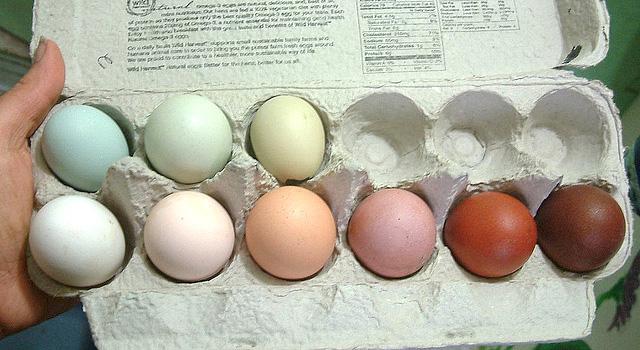 Diferentes colorações de ovo. Imagem do site http://benstarr.com/